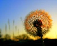 Pensar en positivo y resiliencia,dos protectores de la felicidad